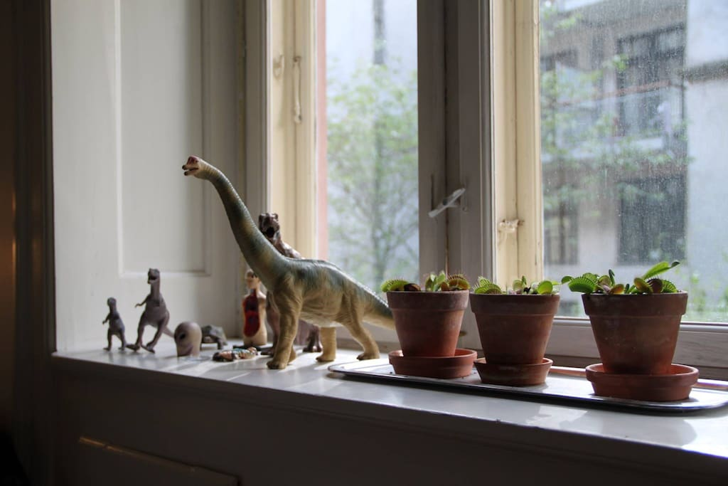 Meat eating plants and dinosaurs