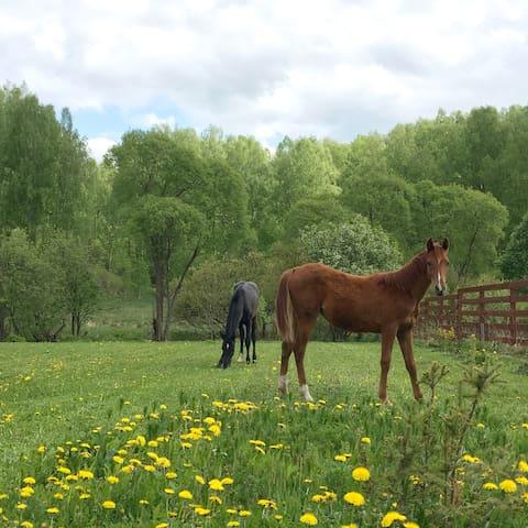 "Агротуризм  ферма ""БЕМЕ"" - Dolskoye"