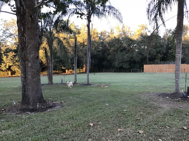 Large yard, fenced in!