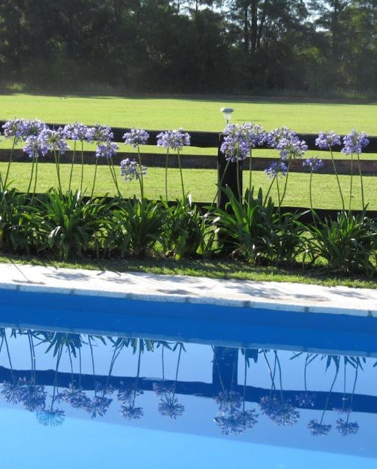 Private pool overlooking the polo pitch