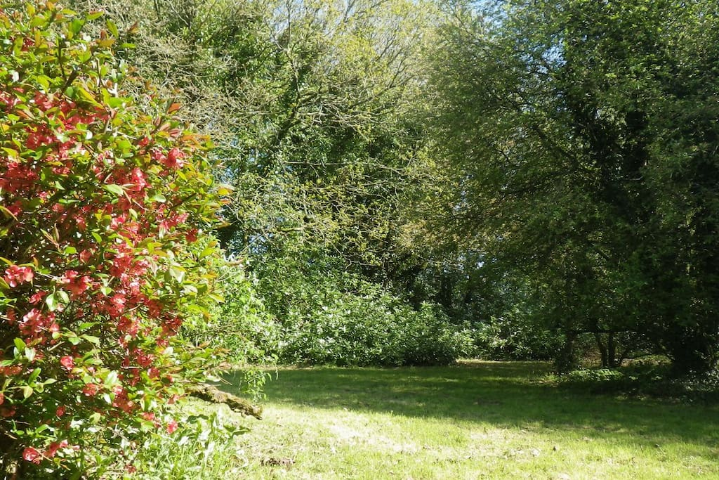 Le jardin nature bordé d'un talus