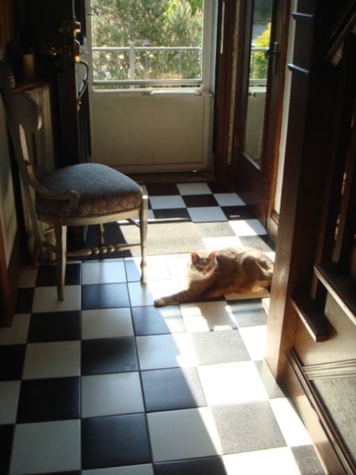 Enjoying the early morning sunshine at the front door.