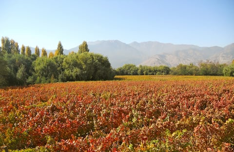 Our beautiful vineyard in Autumn, the house is in the middle of the property. This is the view in September