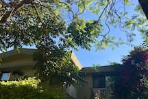 Because of the three-story home across the street, we encouraged a more massive tree growth to make the private balcony comfortable to sit and relax on giving our guests and the neighbors the same courtesy of privacy. It also makes a shady afternoon.