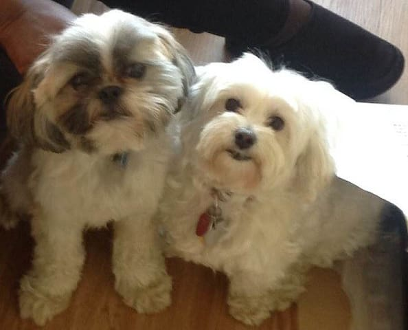 """The live-in dogs. They are allowed in all common areas. Corrina:""""Their dogs are loving and adorable"""""""