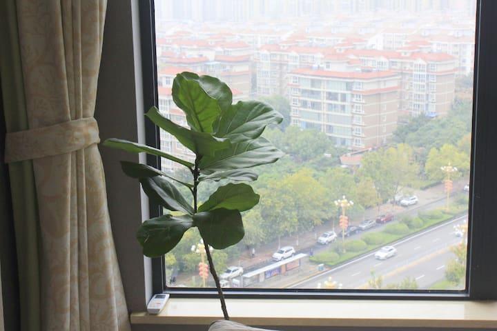 卧室  绿植