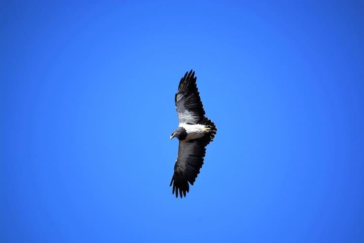 Águila frente a terraza