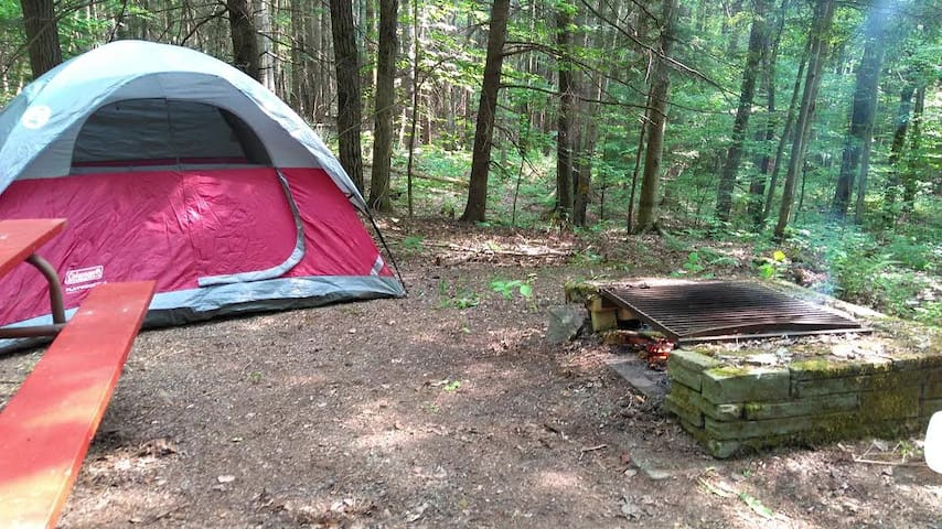 Forest Campsites in Beautiful Natural Campground