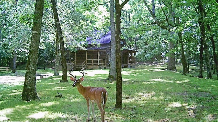 The Farmhouse Cabin with Deer View @ Bean Creek