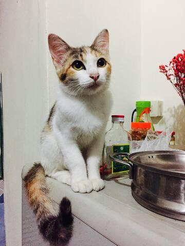 Kitty's Love 薇薇的爱 - 伯普特 - Loft