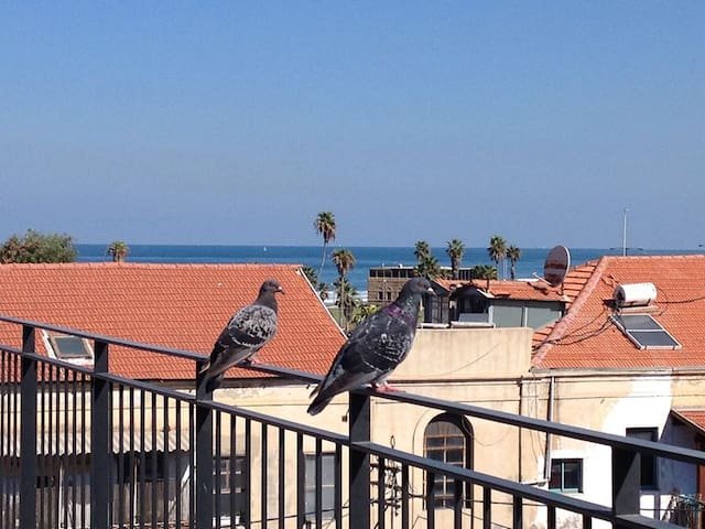 Luxurious Jaffa Rooftop - catering