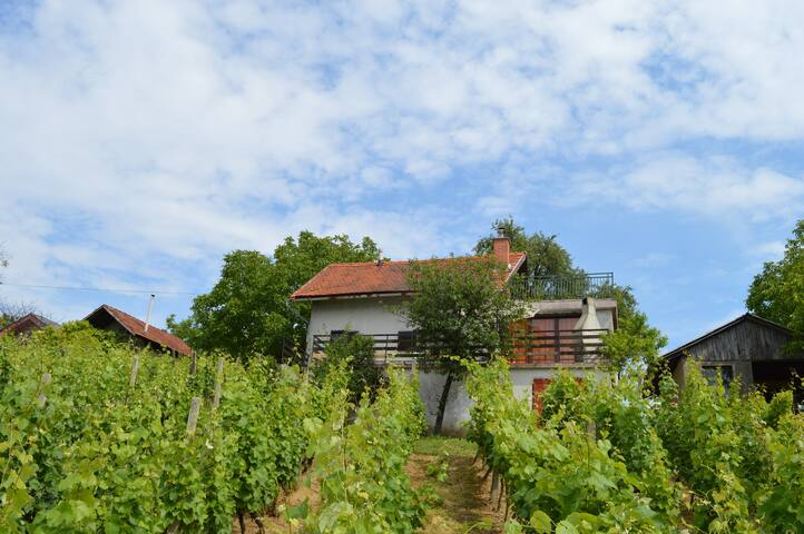 House in vineyards for relaxation - Sveti Urban - Maison