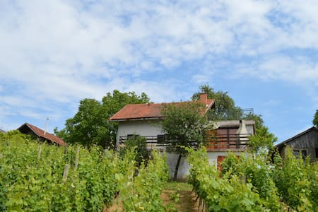 House in vineyards for relaxation - Sveti Urban
