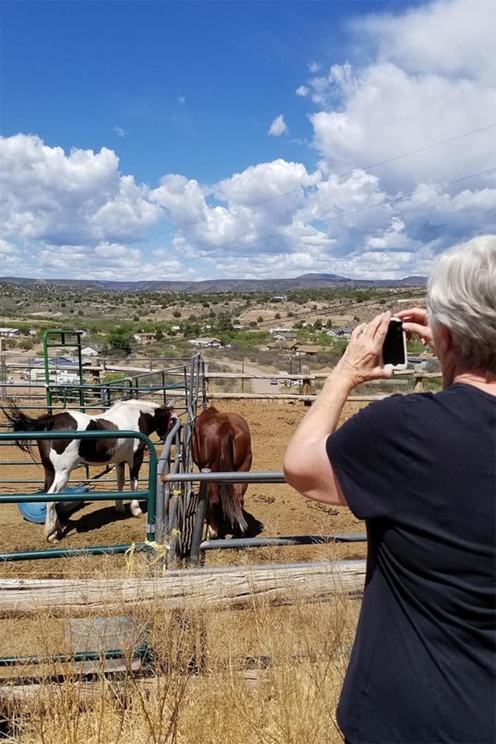 Visiting the Horses on the Ranch . . .