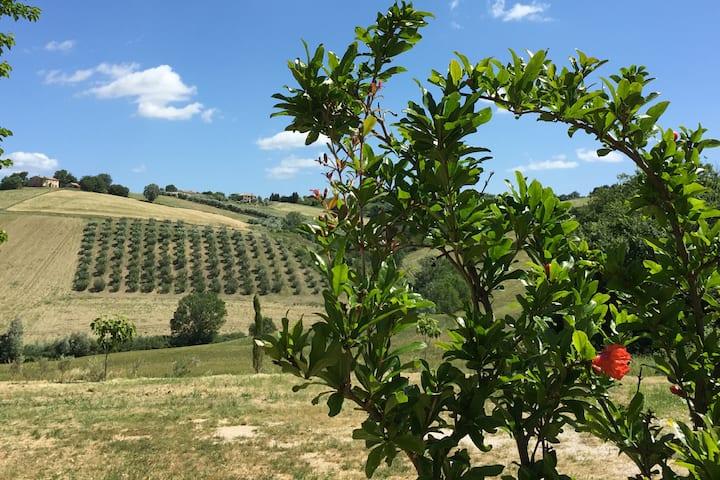 """""""Il Giardino nella Valle""""Agriturismo-Apt.Melograno"""
