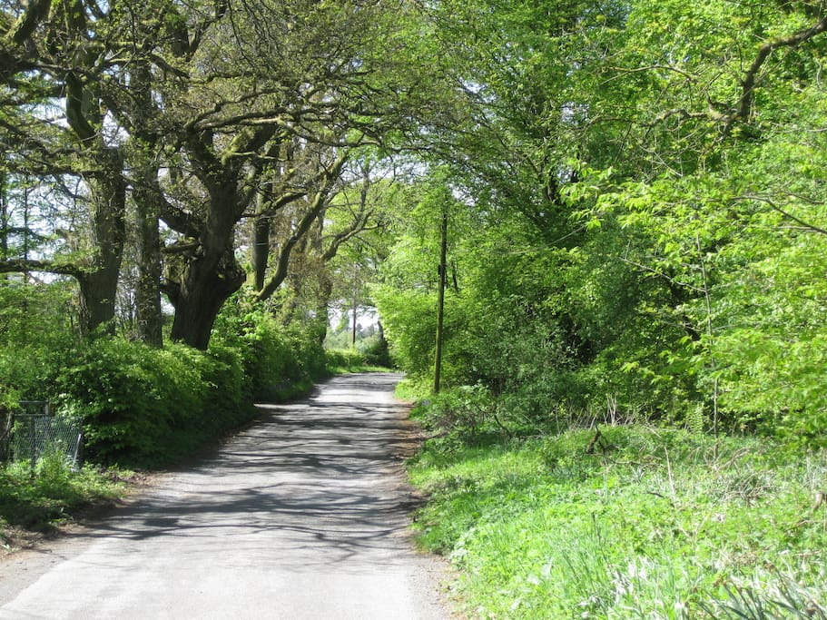 Our leafy lane outside the house, great for walks & cycles. Just 1 mile walk to the local village Inn.