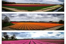 Great picture of the tulipfields early may