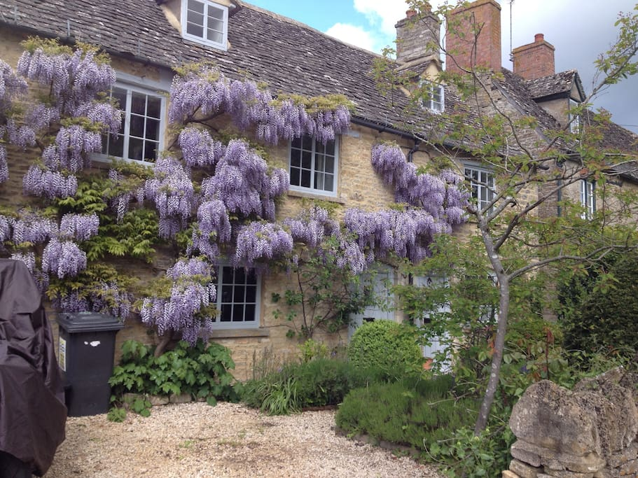 The cottage with wisteria in full bloom