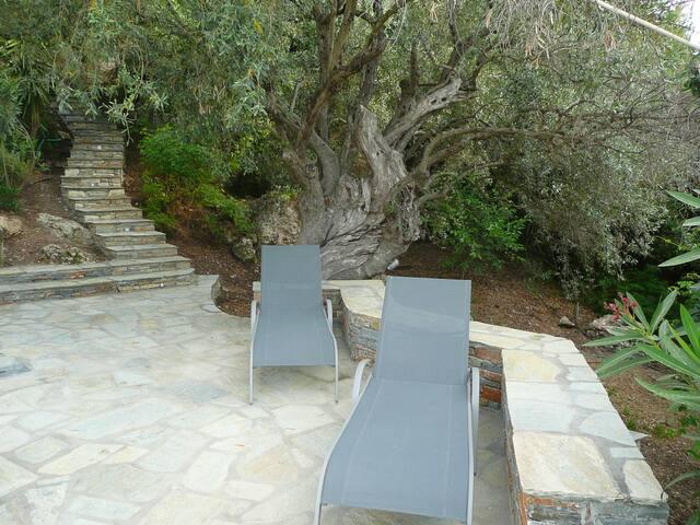 Entspannung unterm Olivenbaum