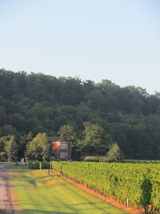 The Estate House nestled against the Escarpment with its sea of vines