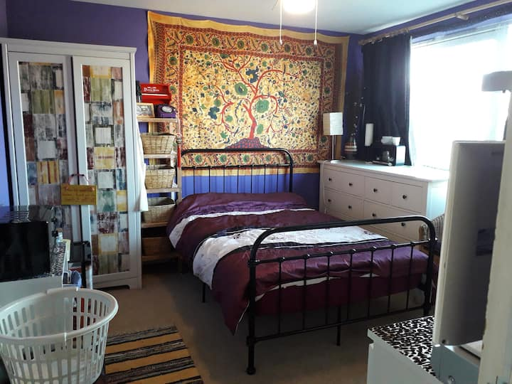 No smoking, vegetarian home with 3 cats N London