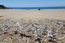 Bluff Beach Devonport 10 minutes walk