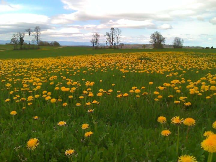 Erholung pur im idyllischen Jura mit Alpenblick