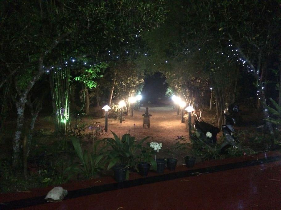 Mimosa garden lights