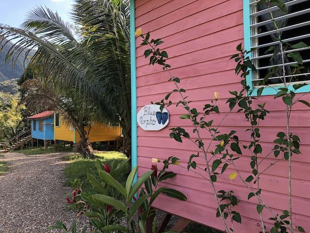 Blue Morpho Cabin
