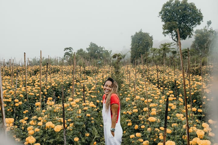 Marigold Farms