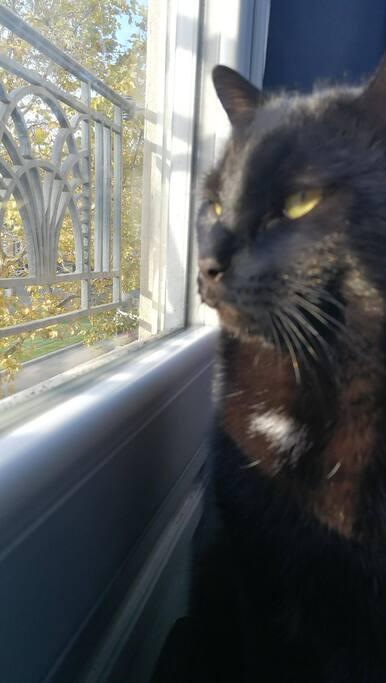 Salem le chat