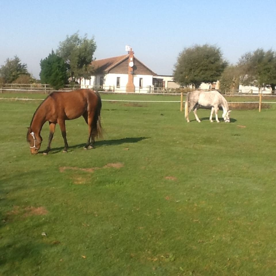 We are horse friendly