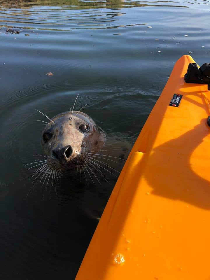 Just one of the friendly seals!