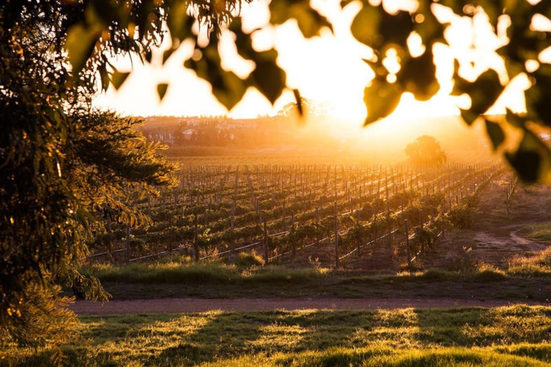 Vineyards at Val de Vie Estate