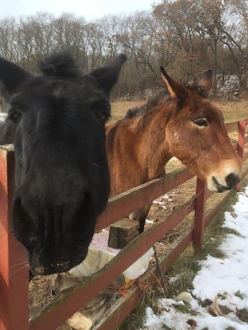 Country living, kid friendly, farmhouse retreat
