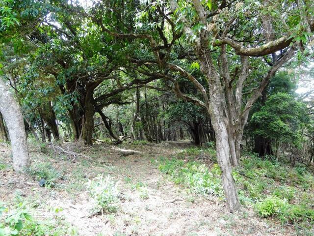Cabinas de Montaña for nature fans - San José de la Montaña - Cabaña