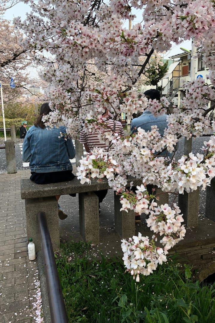 We had a cherry blossom (hanami) party