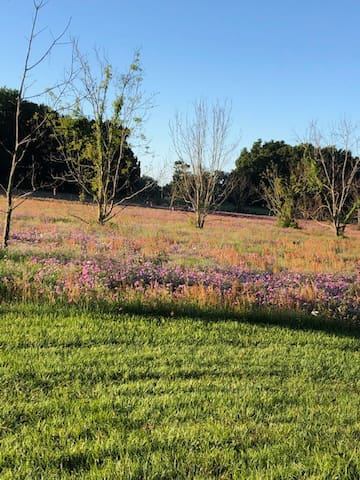 What a wild flower front yard view;