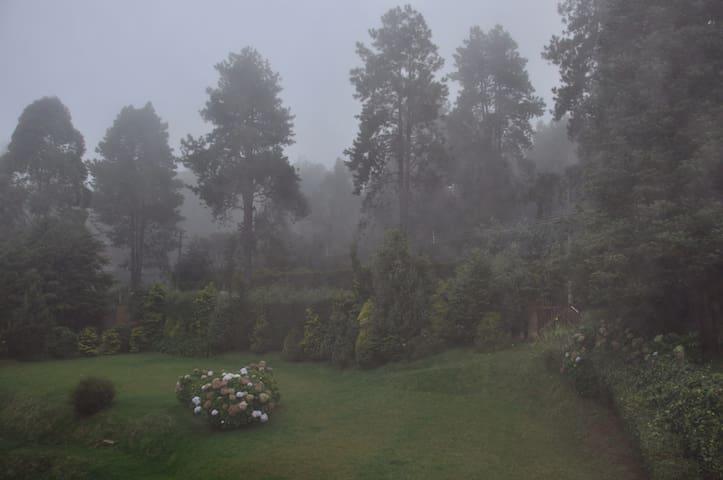 Um dia de dog-no melhor estilo londrino jardim da Casa