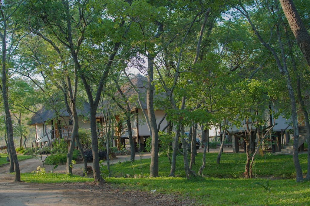 The four tree houses engulfed in  leafy trees.