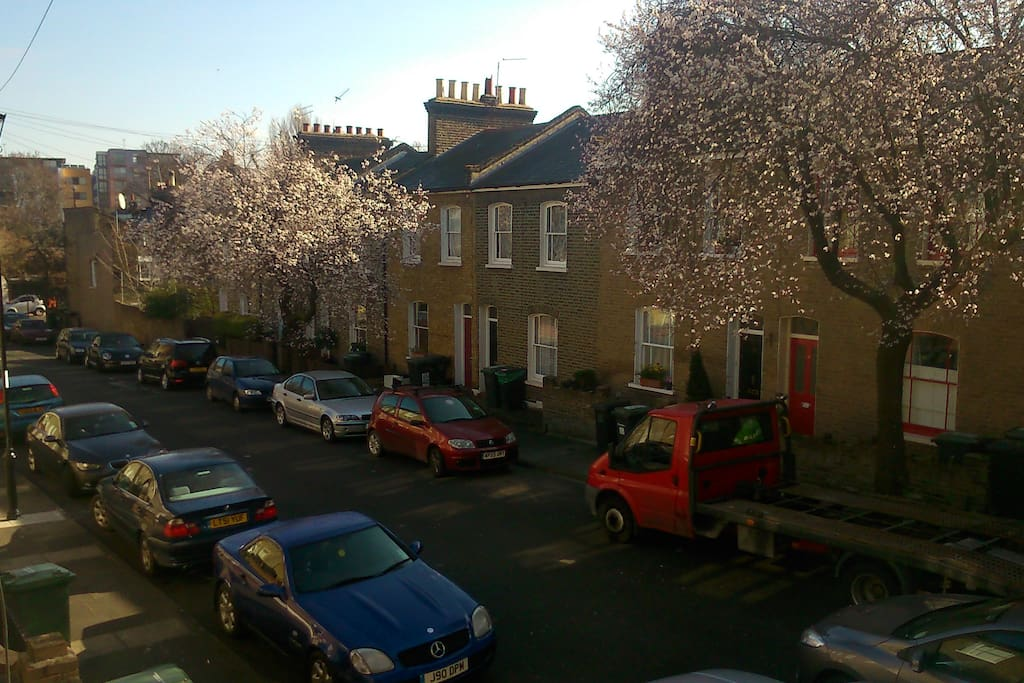 Spring blossom on the street