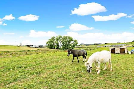 Pokeno Villa, lovely pony, New Zealand Lifestyle