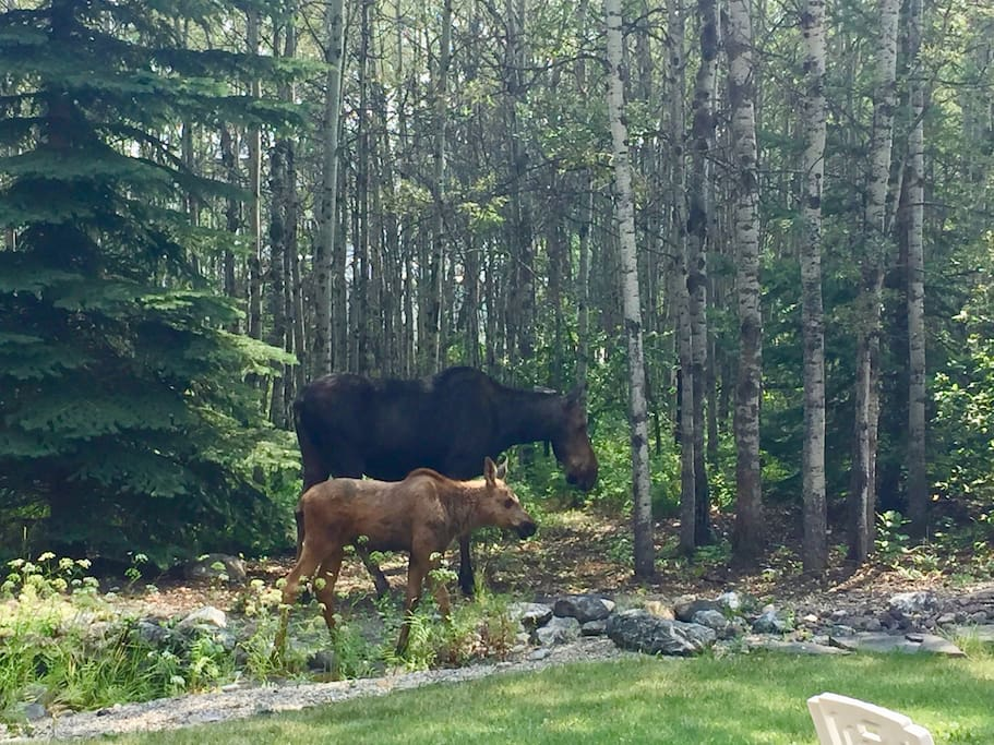 We neve know when a moose or two might show up.
