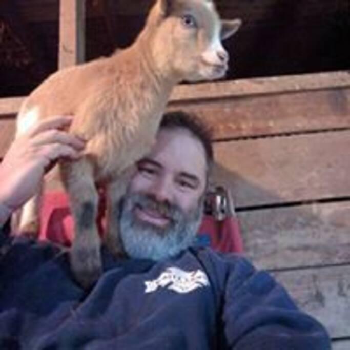 Circus goat