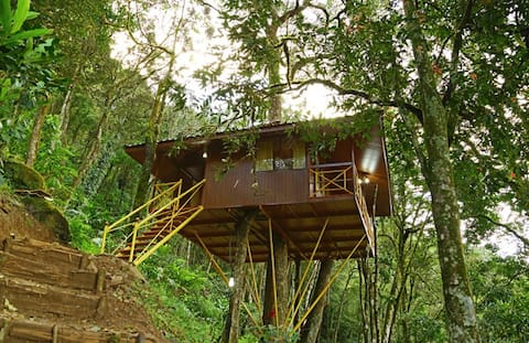 Tree house in Munnar hill station