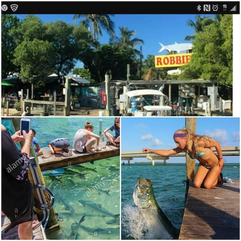 Feed wild Tarpon. At the world famous Robbies Marina, just a short drive away on mm 78.