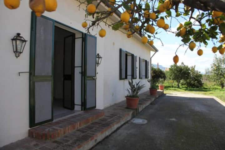 The Lemon Tree House