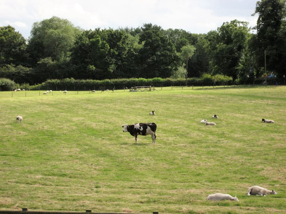 View from guest bedroom window over field to wood (Summer 2016)