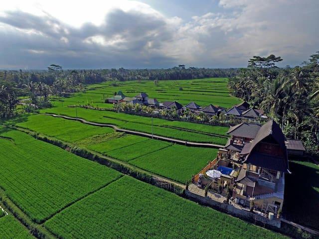 Amazing 1BR Pool and Rice Field View Ubud