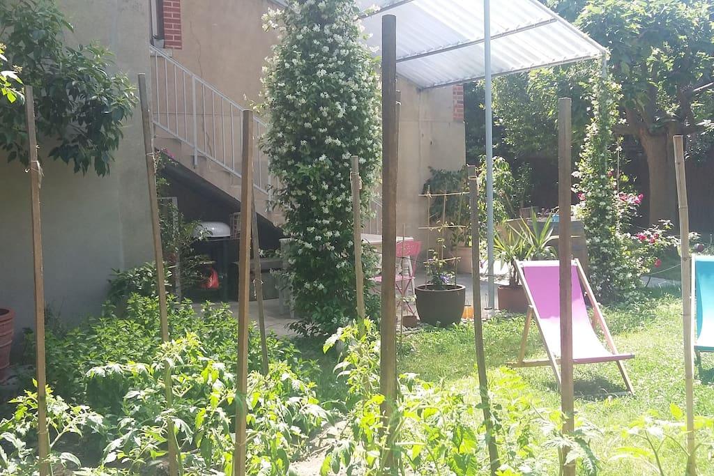 potager d'été : tomates, concombres, fraises, poivrons, courgettes et herbes aromatiques